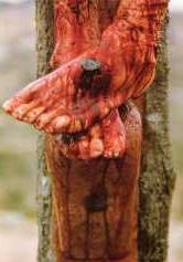 calvary-jesus_feet_nailed_801